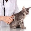 Ветеринарные клиники в Парфентьево
